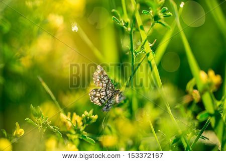 Butterfly With Outstretched Wings. Fresh Green Grass And Yellow Wildflowers With Water Drops On The