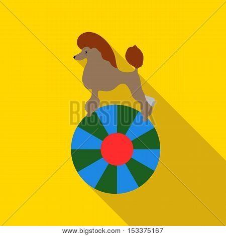 Circus poodle on the ball icon. Flat illustration of circus poodle on the ball vector icon for web isolated on yellow background