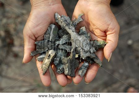 fragments of shells in the hands of an elderly woman