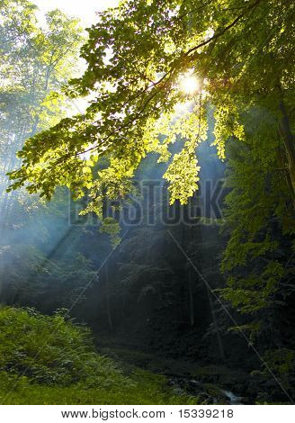 Morning sunshine in a forest