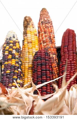 Multi-colored ears of dried corn in basket on white background