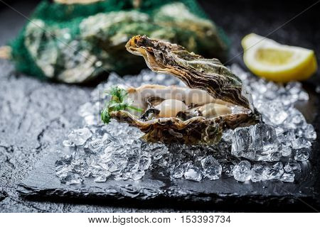 Closeup of delicious oysters on ice with lemon