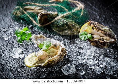 Delicious Oysters On Crushed Ice Ready To Eat