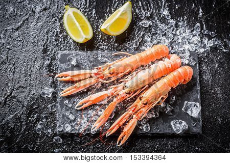 Freshly caught langoustines on ice on old wooden table