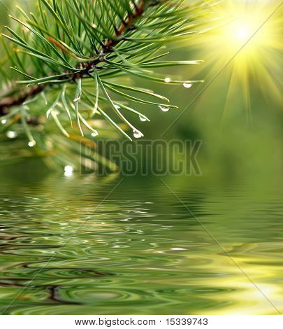 Green branch of pine-tree reflected in the water