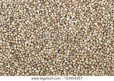 Dried raw black-eyed peas (lobia) spread as background