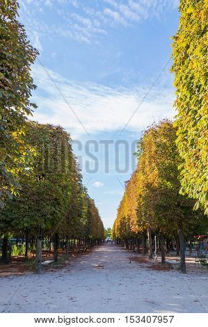 Beautiful Alley On Lower Champs Elysees Boulevard