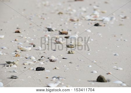 Shells on sandy beach. Sea shell on sand beach. Summer beach background