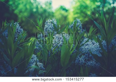 Close up flowers in Beautiful day with blur Background