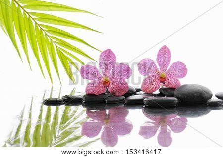 Still life with zen stones and two pink orchid with palm