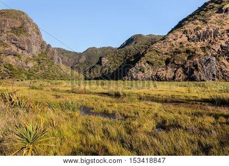 Whatipu swamp in Waitakere Ranges in New Zealand
