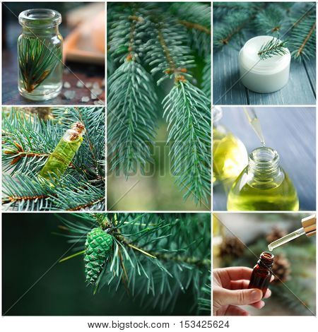 Collage of coniferous spa. Beauty treatment concept.