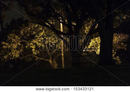 Dark Gloomy Scary Tree Background Setting