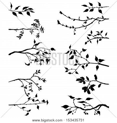 set of tree branches with leaves and berries, fruit trees twigs, isolated hand drawn vector elements