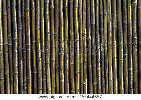 bamboo fence for background. old fence. wall