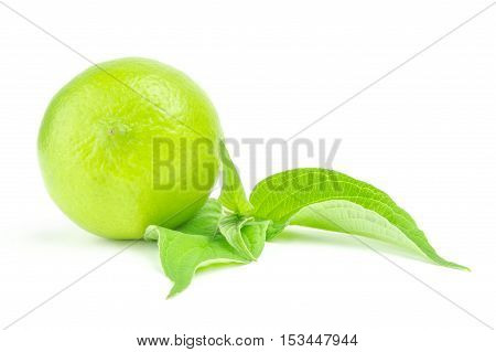 whole lime with leaf isolated on white background.