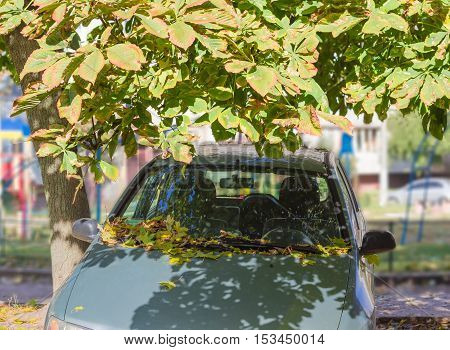 Front end of car under a tree with the hood and windshield covered with fallen leaves