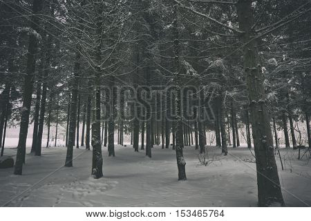 A winter park with trees covered by snow