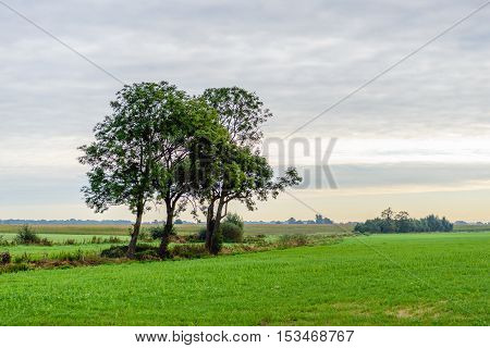 Three trees against a cloudy sky on an early morning in the beginning of the fall season. The trees growing along a ditch between the various fields.