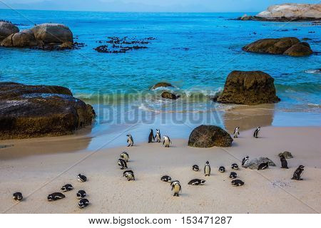 Boulders Penguin Colony in the Table Mountain National Park, Africa. The concept of active and ecotourism. African black-white penguins
