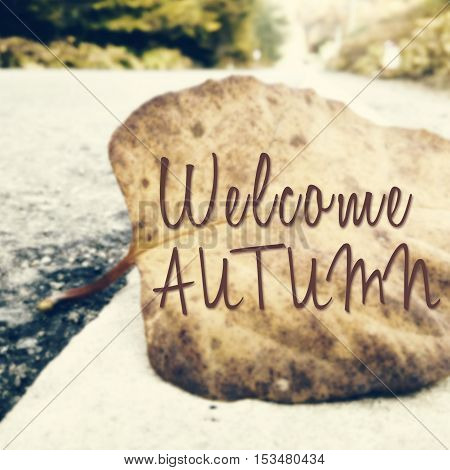 Inspirational Quote About Autumn