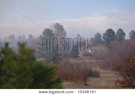 Burning Tree brand