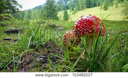Two red toadstools growing in the grass surrounded by mountain nature