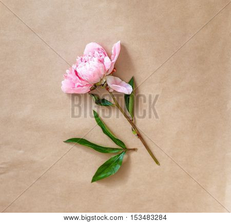pink peony on craft paper with space for text