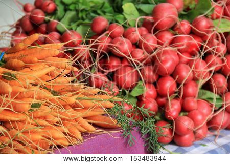 Bunches of carrots and radishes on display for sale at local farmers market.