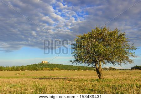 Apulia landscape: Alta Murgia National Park.In the background Castel del Monte.-ITALY(Andria)-	Hilly landscape with lonely tree.