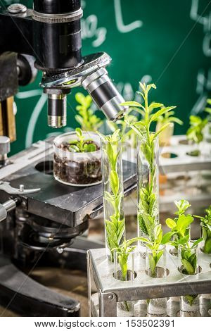 Closeup of university lab during study growing plants