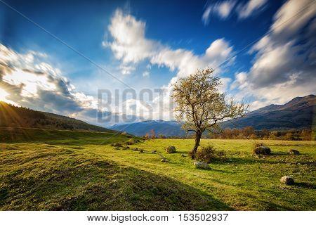 The lonely tree, near Tazha village, Bulgaria