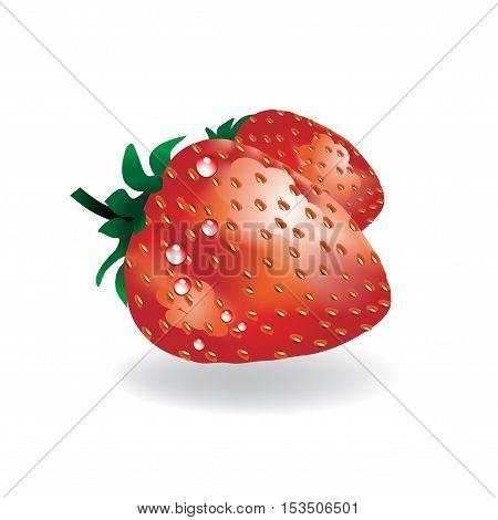 Vector strawberry on white background - illustration