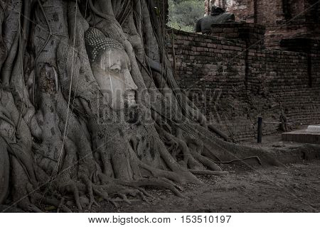 Ancient Buddha is surrounded by trees. Enshrined in Wat Mahathat in Thailand.