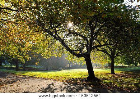 An image of a colourful Autumn landscape.