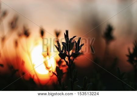 Silhouette of plants and trees in a landscape sunset sky spring evening