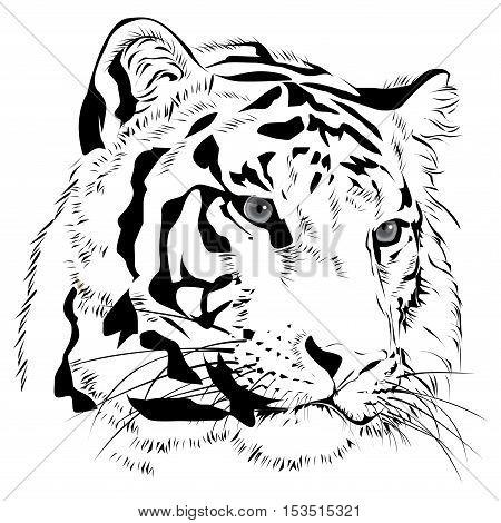 Tiger head hand drawn monochrome on white background illustration.