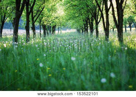 Spring grass between the treesserene,