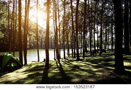 Sun rise at forest in Thailand select and soft focus