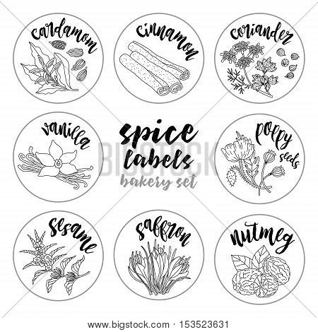 Spices and herbs jar labels and stickers. Contour vector condiment bakery set with cardamom, coriander, cinnamon, vanilla, poppy seed, sesame, nutmeg, saffron. Botanical illustrations