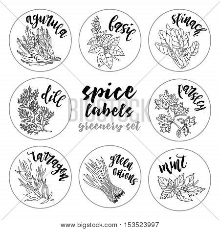 Spices and herbs jar labels and stickers. Contour vector condiment greenery set with arugula, basil, spinach, dill, parsley, tarragon, green onions, mint. Botanical illustrations