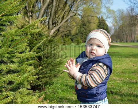 A little boy claps his hands around a green tree