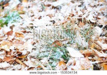 First Snow After Snowfall On Falling Leaves And Grass Background
