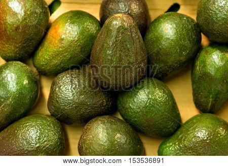 Lots of bright avocados in supermarket. Close-up view