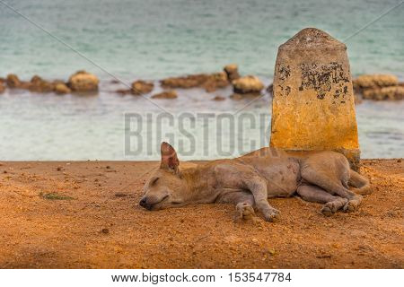 Sleeping old stray dog on the beach