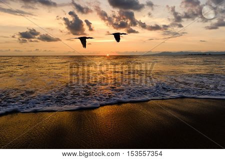 Birds flying Ocean sunset silhouettesis two seabirds flying over the water as the sun sets on the colorful ocean horizon.
