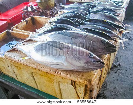 Fresh fish tuna at Jimbaran fish market at Bali Indonesia.