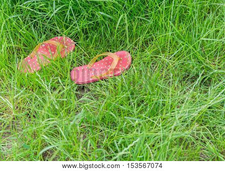 Colorful rubber slippers or flip flops on fresh green grass. Summer.
