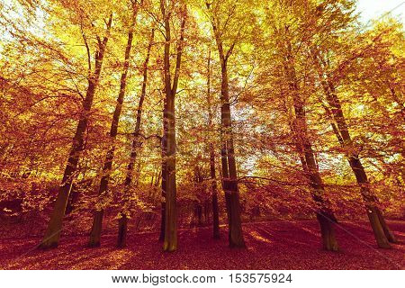 Autumnal season concept. Colorful autumn in park. Many beautiful trees.