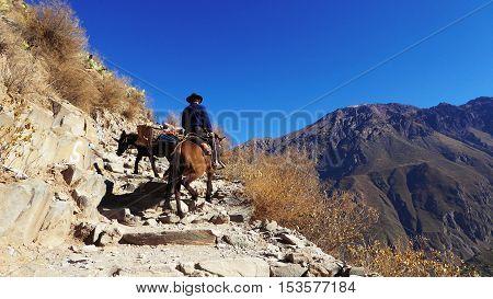 cuando el unico medio de transporte aún és con caballo